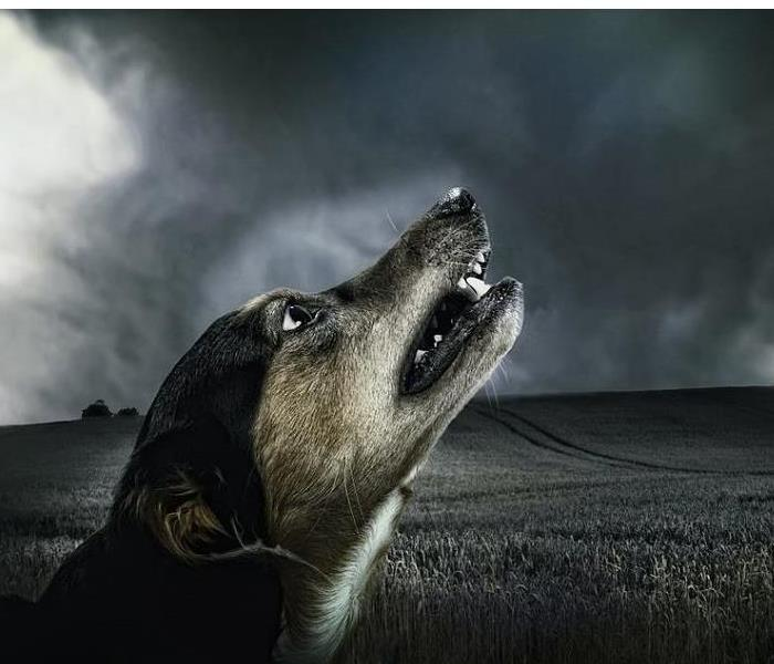 Storm Damage Include Your Pet In Your Tornado Safety Plan!
